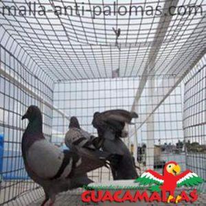 Malla anti palomas en edificios.