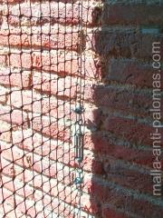 red anti palomas en ladrillos