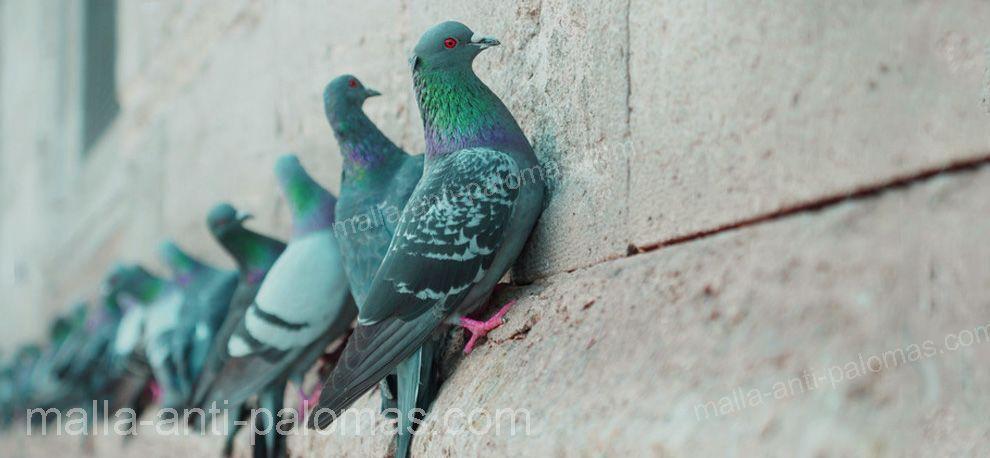 palomas en edificio
